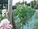 Vigne_chaville_2007