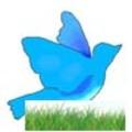 Petits_oiseaux_1